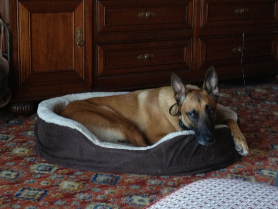 The Crash monster finally tired enough to sit in his bed.