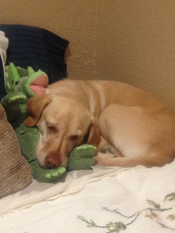 Nala loves my dinosaur teddy bear.