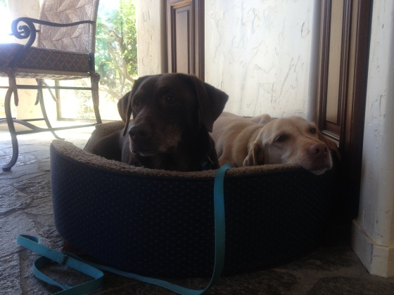 Reeces and Nala in Crash's bed.